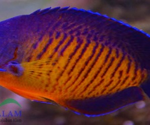 7 Ikan Tercantik Di Dunia