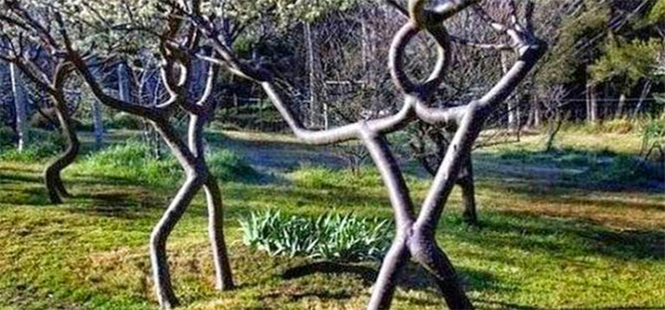 Pohon Sirkus