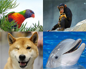 Keajaiban 10 Binatang Terpintar Didunia