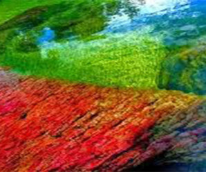 Keajaiban Alam Sungai Lima Warna di Kolombia