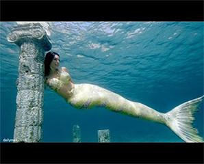 Fakta Ikan Duyung Pernah Hidup Di Bumi