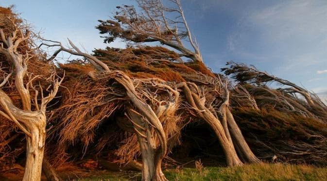 pohon miring 2