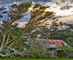 Pepohonan Ajaib, Tumbuh Dengan Miring