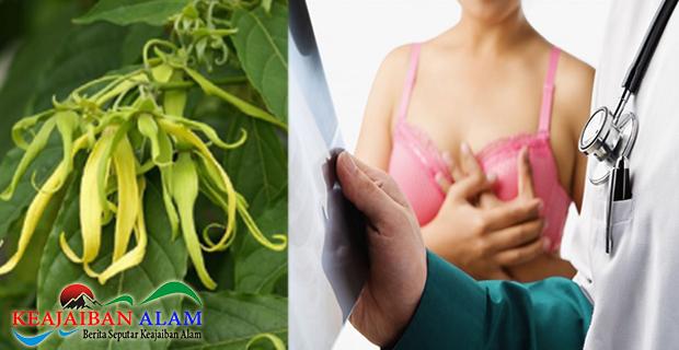 Jangan Remehkan Manfaat Bunga Kenanga Yang Manjur Obati Kanker Payudara