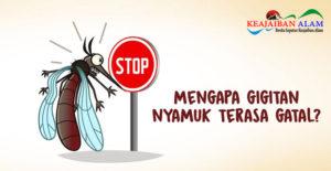 Ada Nyamuk, Ada Gigitan! Mengapa Kulit Tubuh Manusia Menjadi Terasa Gatal dan Bengkak Pasca Digigit?