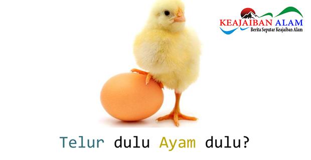 Sudahkah Anda Berhasil Menjawab yang Mana Duluan, Ayam Atau Telur? Yuk Simak Apa Jawabannya