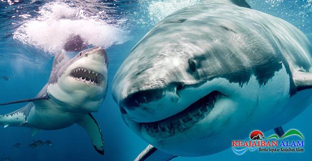 """Benarkah Ikan Hiu Megalodon Yang Seperti di Film """"The Meg"""" Masih Dapat Ditemukan di Lautan Lepas?"""
