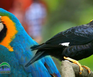 Cari Tahu Yuk Mengapa Burung Beo dan Kakatua Dapat Meniru Suara Manusia?