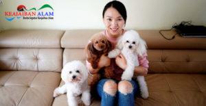 China Hadirkan Pilot Wanita Cantik Sebagai Kapten Penerbangan Maskapai Spring Airlines, Siapa Dia?