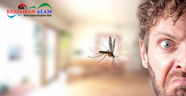 Ini Dia 3 Alasan Mengapa Nyamuk Suka Berterbangan di Sekitar Area Telinga dan Kepala?