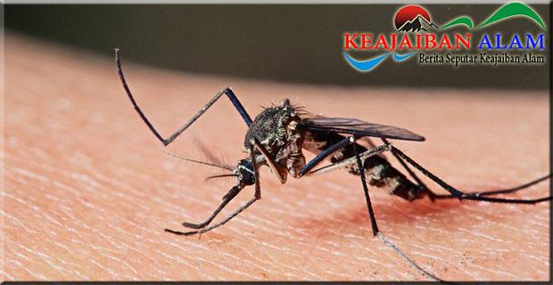 Begini Cara Bedakan Demam Malaria, Chikungunya, dan DBD