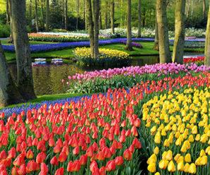 Beberapa Taman Bunga Populer di Seluruh Dunia