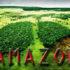 Fakta Hutan Amazon Sang Paru-Paru Dunia