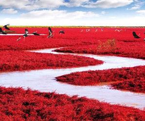 6 Keajaiban Alam Berwarna Merah yang Menakjubkan di Dunia
